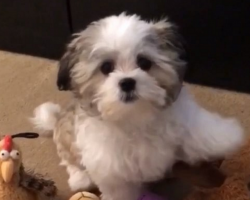 How This Little Pup Responds To Mom Is So Adorable It Hurts… Oh My!