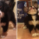 How this Bernese Mountain Dog pup reacts to his very first bone is… oh my.