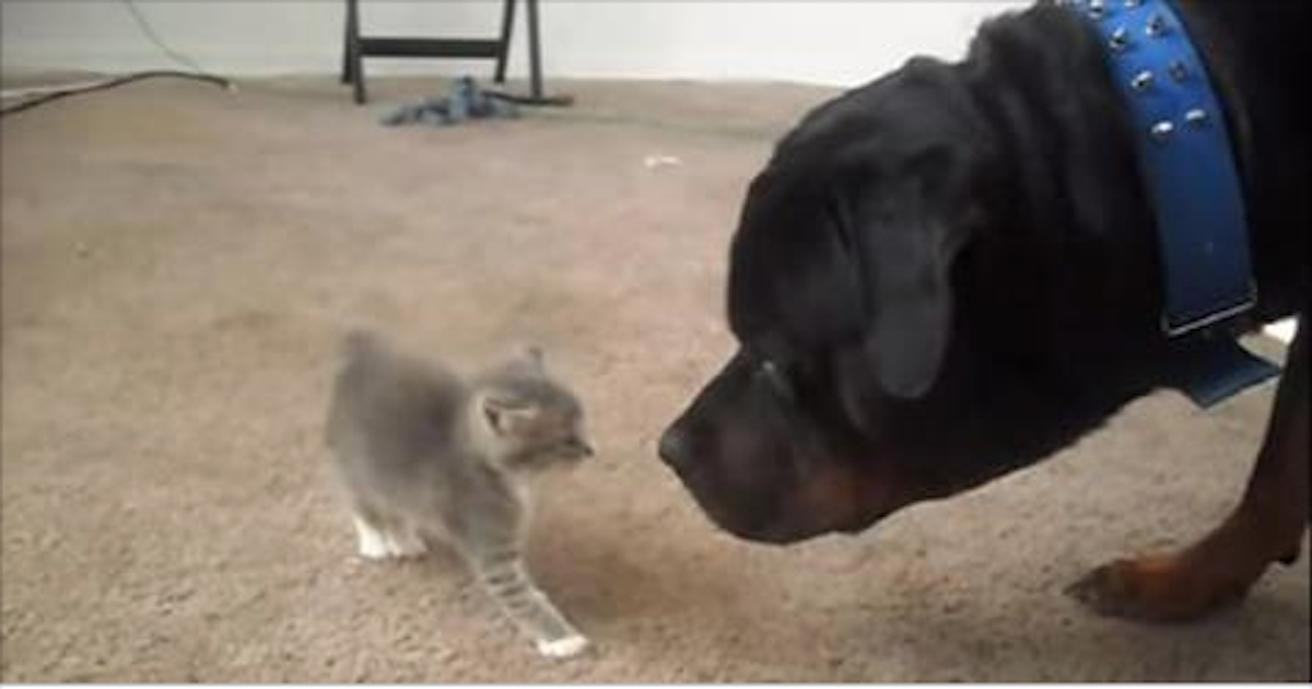 what happens when two kittens meet