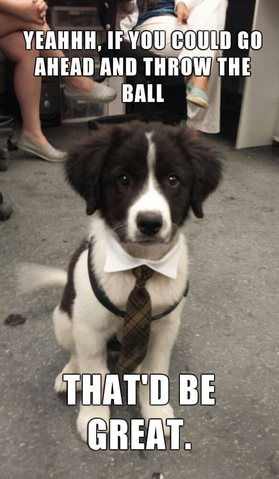 border collie puppy memes
