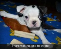 This Puppy Can't Stand, Sit Or Walk. What Happens Is Nothing Short Of A Miracle.