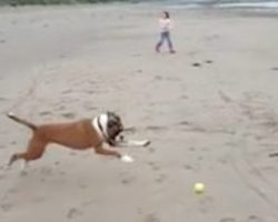 Funny Boxer Dog Can't Believe It When He Wipes Out While Playing Fetch