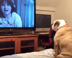 Bulldog Watching Horror Movies Does Sweetest Thing When She Sees Kids In Danger