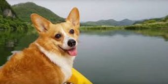 Pack Your Bags, You're Going To Camp Corgi!