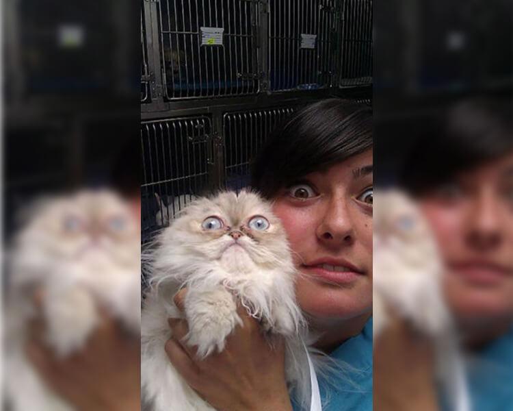 cat-scared-vet.jpg