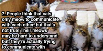Fascinating Facts About Cats That Even Crazy Cat Ladies Don't Know