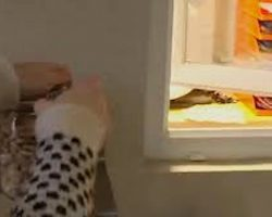 Every Time Mom Opens The Cookie Jar Her Dog Miraculously Appears