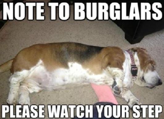 cool basset hound meme