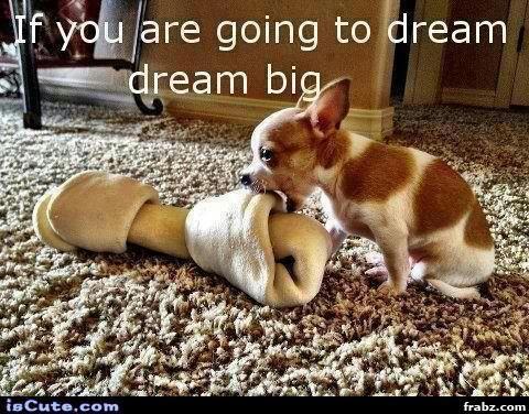 cute puppy chihuahua dream