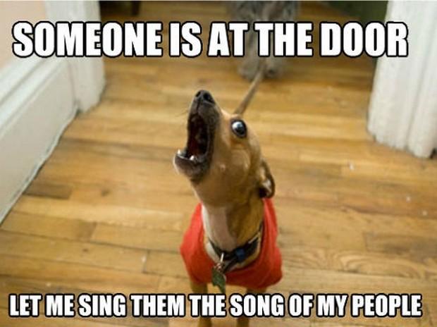 dachshund meme at the door