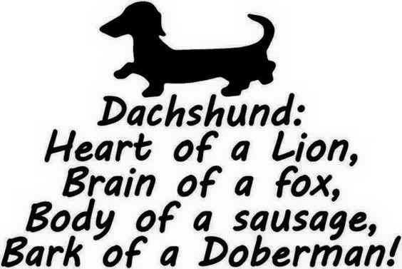 dachshund meme brave dog