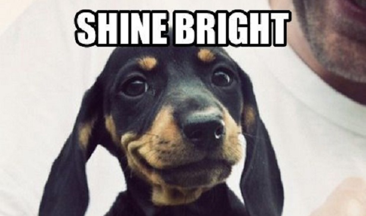 dachshund meme smile 12 best dachshund memes of all time,Dachshund Meme