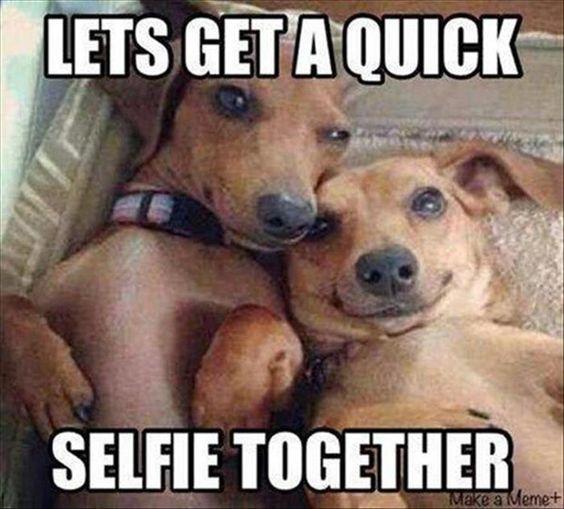 dachshund selfie meme faces