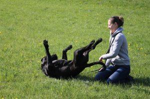 dog-594750_1280
