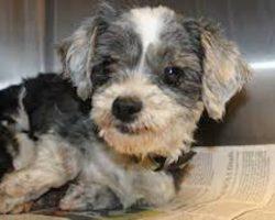 Tiny Dog Found In Deep Ravine Nursing Orphaned Kitten