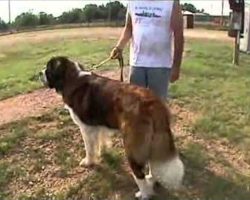 A Tornado Is Destroying Their Home. This St. Bernard Does The Unthinkable. AMAZING.