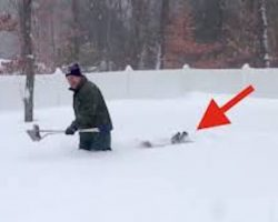 Man Digging Out His Backyards After Blizzard Gets Help From His Dogs