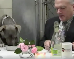Shelter dog was too scared to eat, but this vet knew just what to do