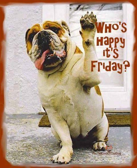 english bulldog happy meme