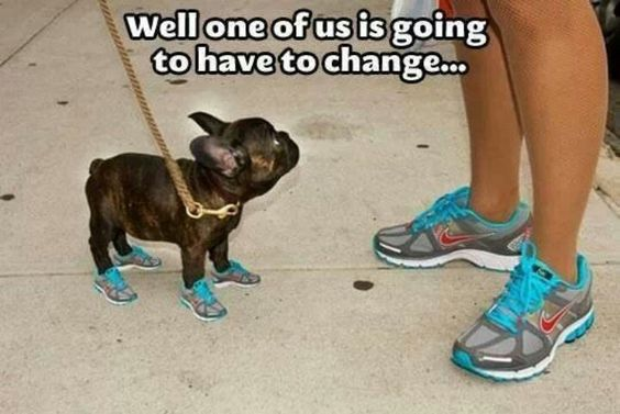 french bulldog shoes meme