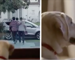 Dog waits all night for his owner to return, but it's the next morning that'll grip your heart