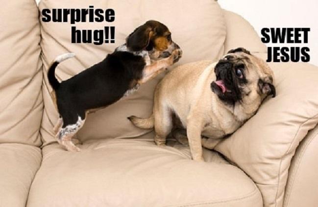 funny dog pug hugs meme