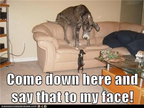 funny dogs memes pics photo
