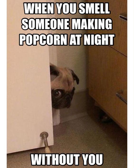 funny meme pug face