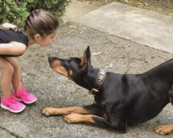 When This Family Got A Doberman, Mom And Dad Never Expected THIS To Happen To Their Daughter