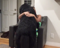 A Giant Newfoundland Pup Doesn't Realize He's Not A Lap Dog — And Hilarity Ensues!