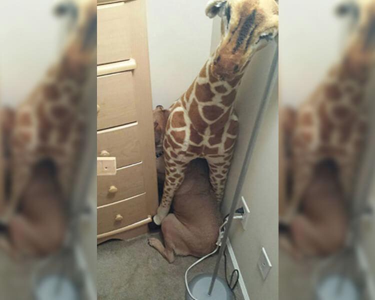 giraffe-hiding.jpg
