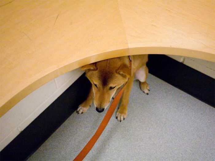 hiding-at-vet.jpg
