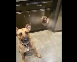 Rescue dog saves a hummingbird and decides to keep it