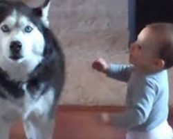 Husky And Baby Caught Hilariously Deep In Conversation