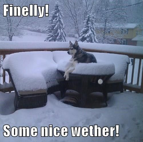 husky snow meme