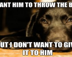 12 Best Labrador Memes of All Time