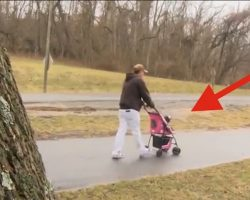 Man Walks His Dog With A Bad Heart In Stroller To Make Her Happy