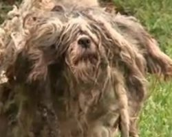 They found a matted ball of fur — now they're about to see what's underneath