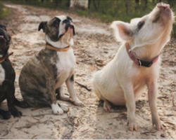 When She Was A Baby, She Found A Group Of Best Friends. They're Unlikely, Yet Inseparable!