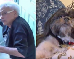 Elderly woman falls and screams for help, but no one hears her — except for her Shih Tzu