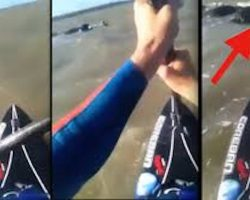 Paddle Boarder Films Moment He Rescues Shih Tzu Stranded At Sea