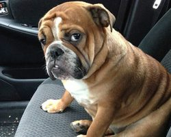 Priceless Photos Of Pets Realizing That They're Going To The Vet