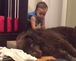 Priceless moment captured between little boy and his gentle giant will make your day