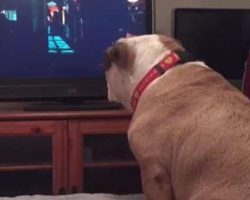 Protective Bulldog Has Cutest Reaction When Watching Horror Movie