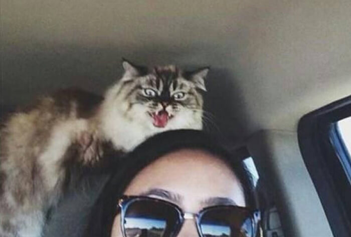 psycho-cat-vet.jpg