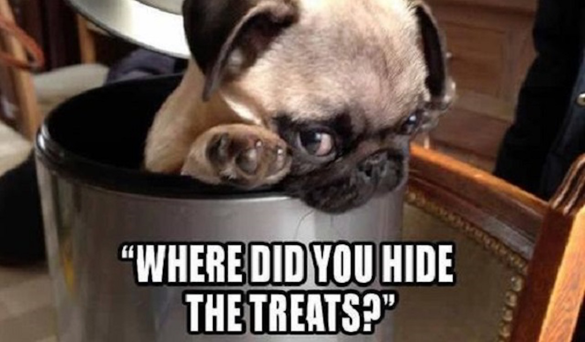 Making Your Own Dog Treats At Home
