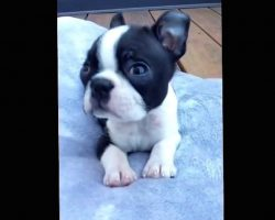 He Starts Singing To His Puppy And The Most Adorable Thing Happens