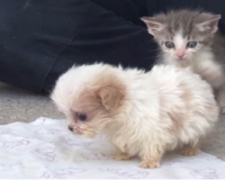 Tiny Puppy Rescued From Puppy Mill Makes A New Friend
