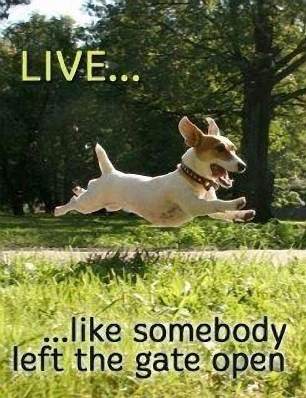 running jack russell dog meme 12 best jack russell memes of all time