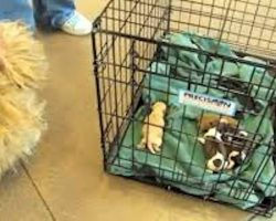 Shih Tzu Abandoned At Shelter In Labor Stops Worrying Once Reunited With Her Puppies